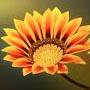 flower_icon_04